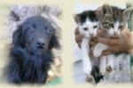 Pomóż bezdomnym zwierzętom
