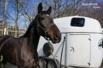 Czarny koń chorzowskiej policji? Nowy funkcjonariusz zaczyna szkolenie