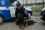 75-letnia chorzowianka odnaleziona. Pomógł pies z Rybnika