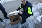 Policjanci uratowali rannego ptaka
